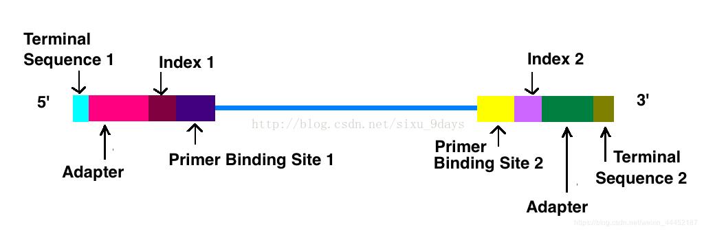 inllumina公司测序的cDNA短链形式