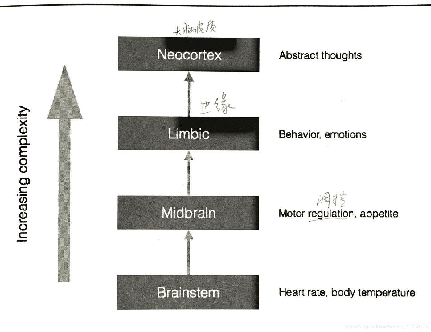 人脑处理信息过程