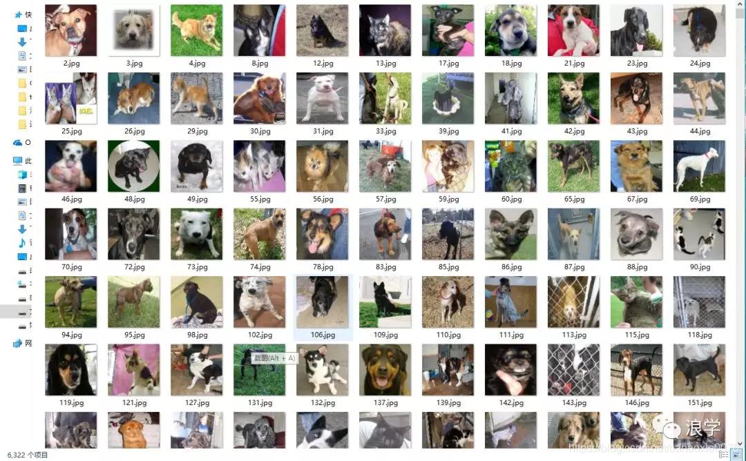 狗类的图片