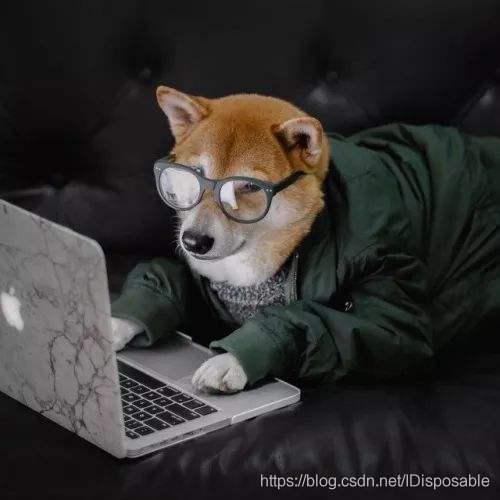 coding dog