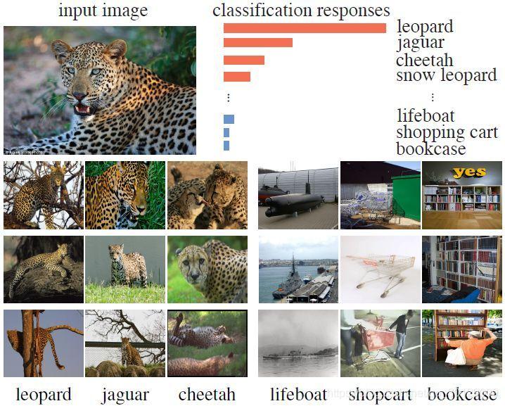 图 1:激励研究者提没无监督方法的有监督进修成效图。以猎豹图片为例,网络输入的几个最高相应类都是视觉相闭的,譬喻美洲豹战猎豹。数据本身的中表类似性而非语义标签,使得某些类比其余类越收接近。该无监督方法将类监督收展到极致,并进修了辨别各个径自实例的特征暗示。