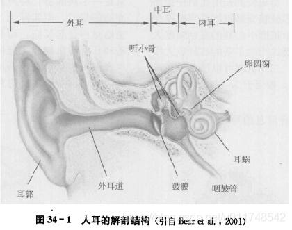 图1 人耳的解剖结构[2]