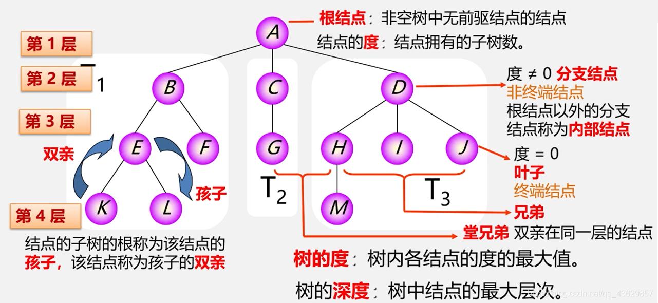 树的基本概念和术语