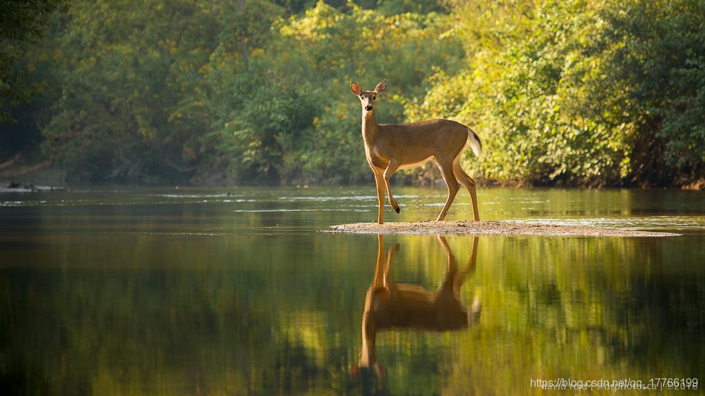 River Deer