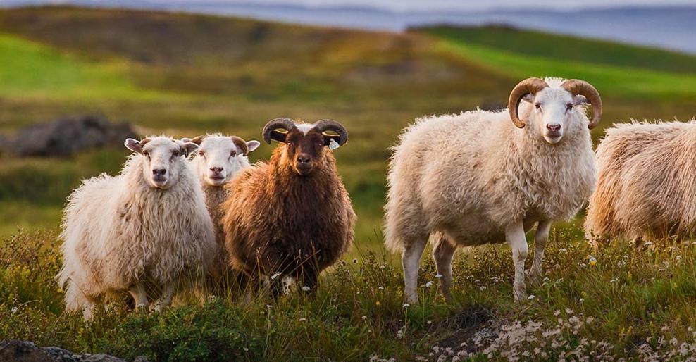 ▲ 拥有一群山羊,对于工程师来讲也不错