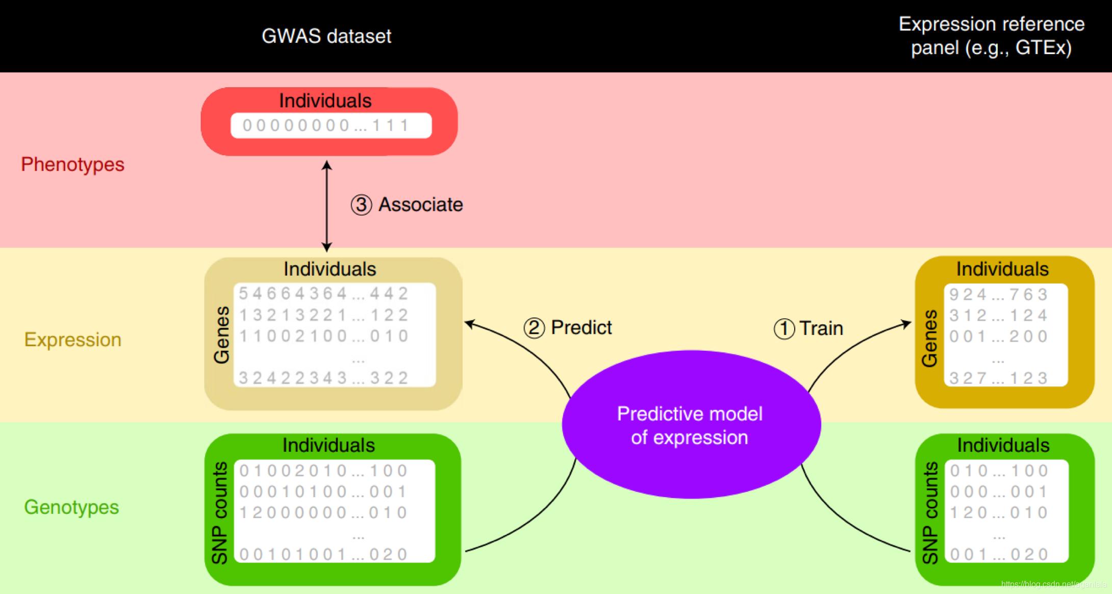 TWAS分析策略