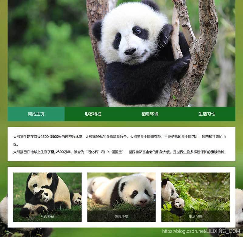 动物网页成品