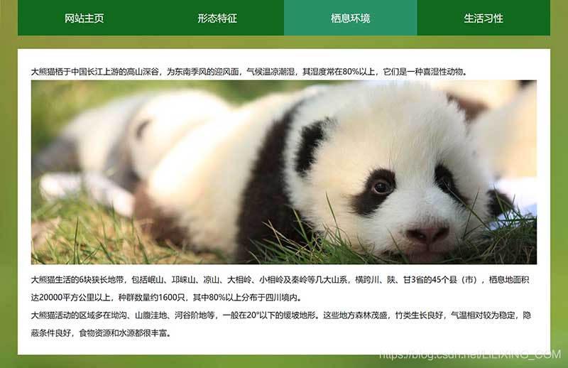 大熊猫网页设计