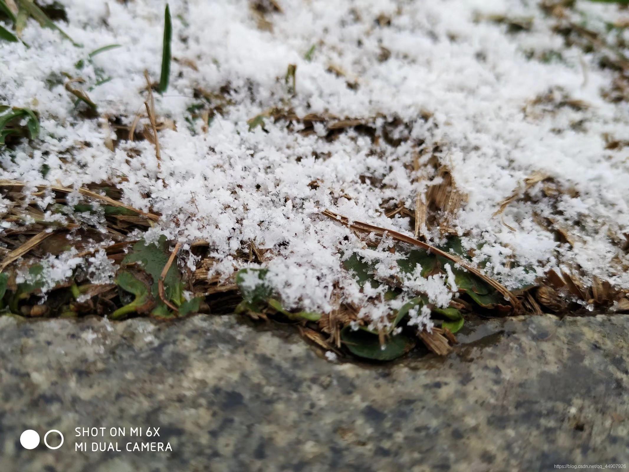 这是几几年的雪都记不清了!