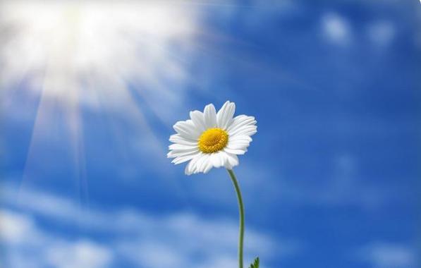 这是一颗向日葵