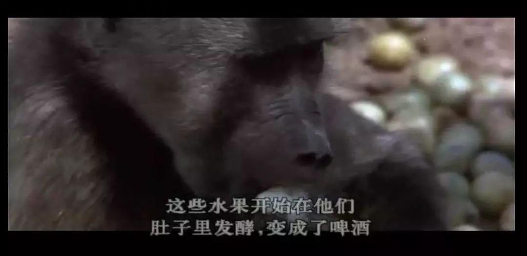 7部史诗级自然纪录片,孩子14岁前要看完!