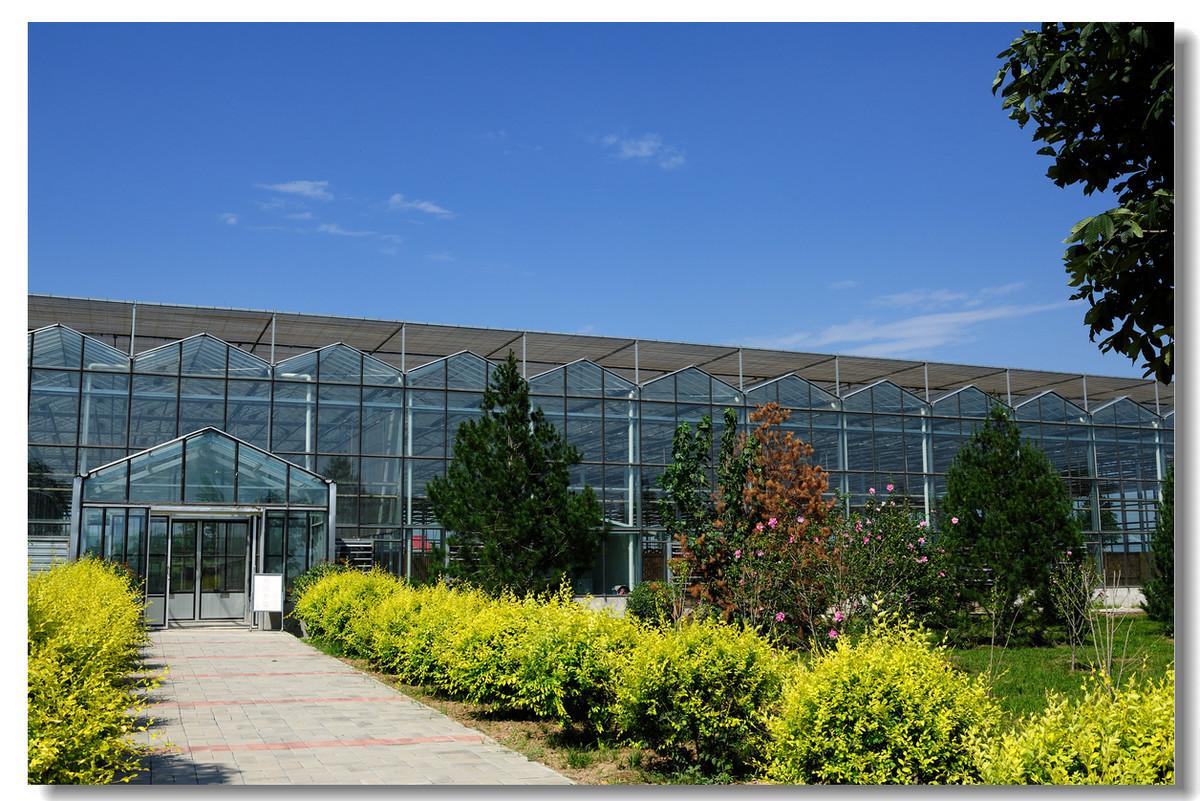 为什么现代农业种植中连栋玻璃温室大棚发挥的优势更明显
